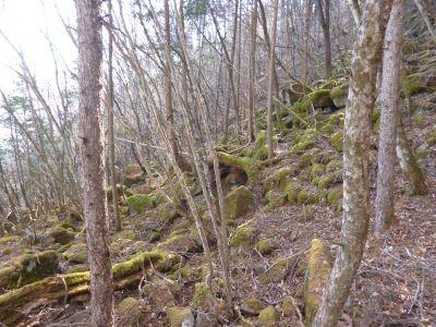 12:17 苔むした登山路