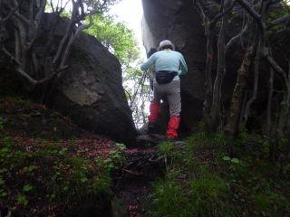 12:05 オオヤマレンゲを求めて狭い山道を行く