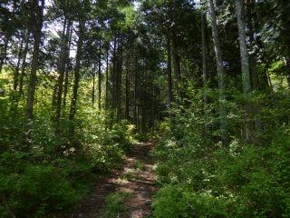 9:22 樹林帯を歩く