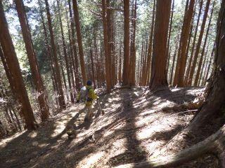 12:30 ここまで来れば雪は無し。木洩れ日の杉林を歩く
