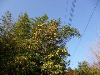14:19 ここらへんは柚子の産地