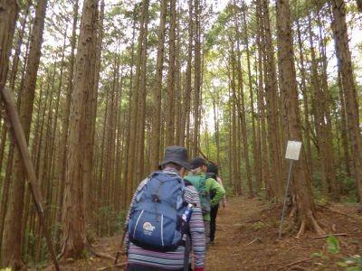 10:30 杉林の登山道を歩く