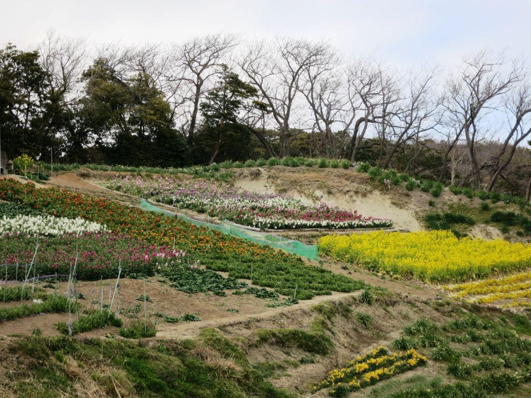 12:58 子安のお花畑