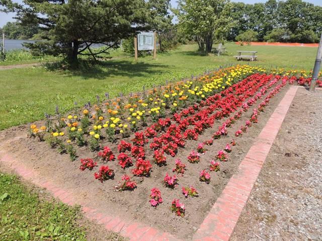 2014.06.27 三重湖公園管理組合に所属する農家の皆さんが育て植えた花たち