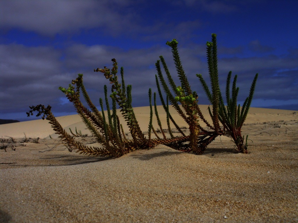 Die Wüste lebt, Orzola Lanzarote