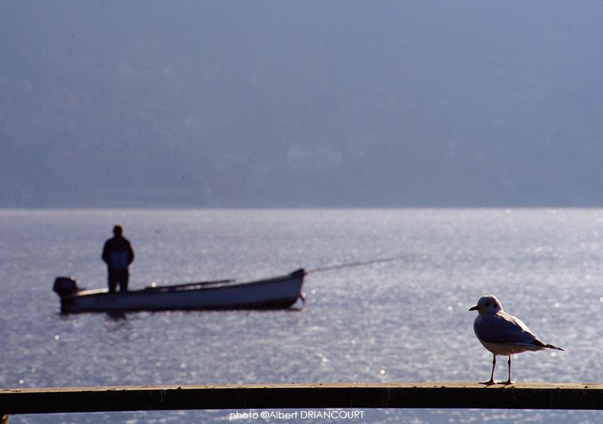 rapprocher la mouette et le pêcheur pour raconter une histoire...