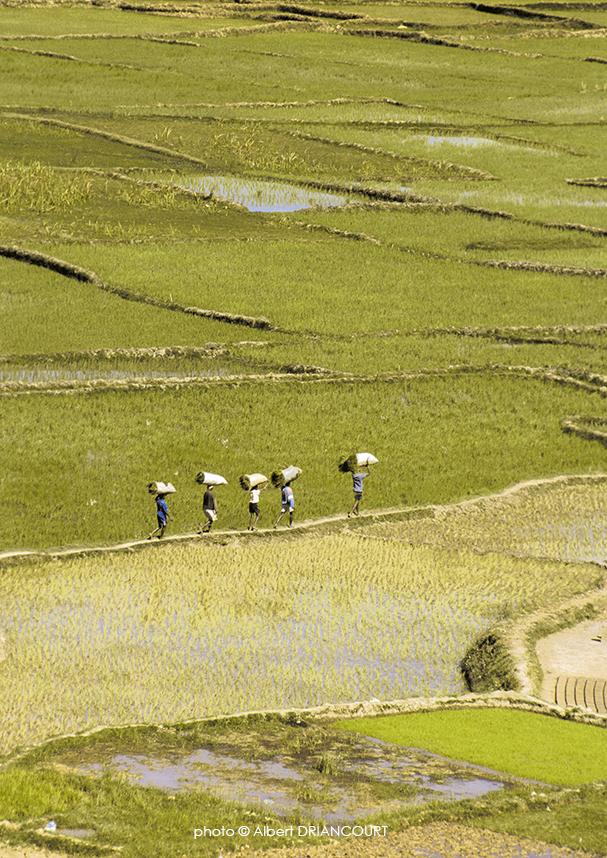 scène de vie dans les rizières, Madagascar