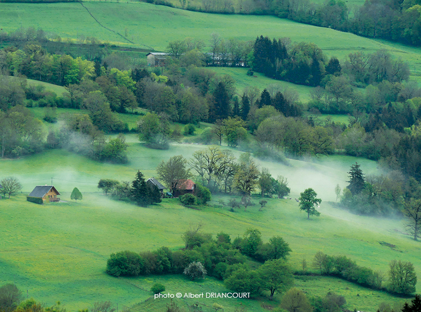 Petit matin dans les Bauges. Un petit banc de brume matinale qui s'est dissipé en quelques minutes, heureusement, j'ai eu le temps de faire la photo.