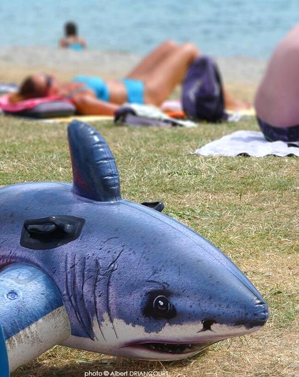requin d'eau douce