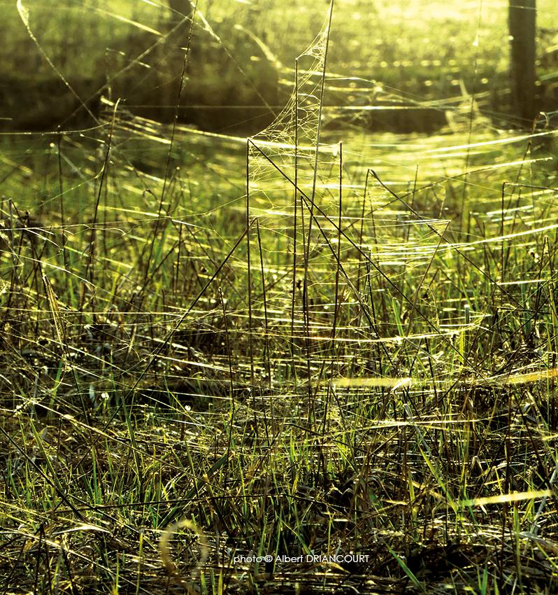 fils d'araignées en perspective au couchant du soleil