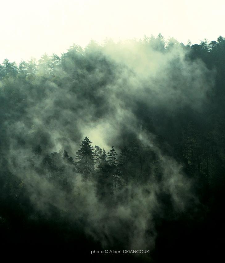 Forêt du Semnoz au petit matin. Photo faite depuis les hauteurs de Cran Gevrier
