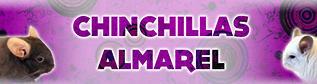 Chinchillas Almarel. (ALI5500)