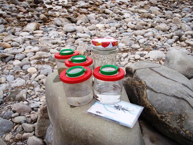 Umweltbildung an der Isar Foto: J. Prummer
