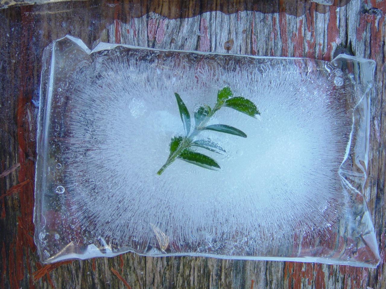 Naturkunst im Schnee Foto: U. Dopheide