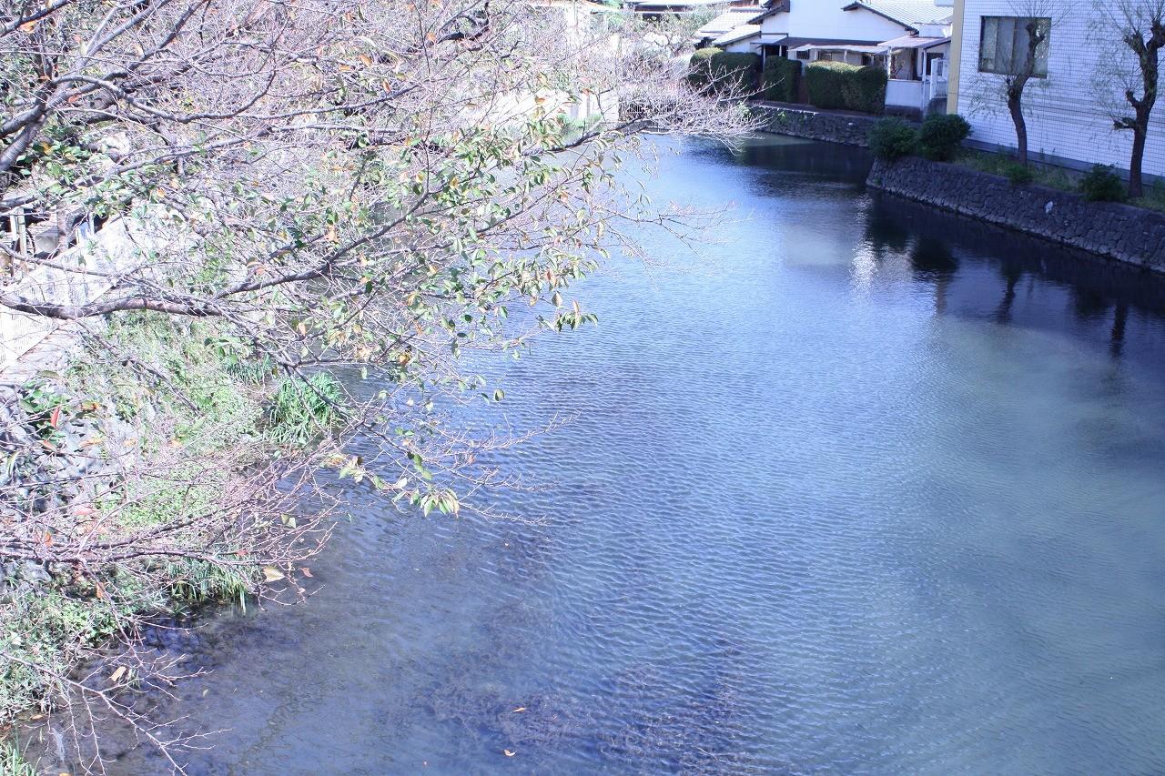 今現在の袋井用水水源地を橋の上から撮影した画像です。春になると桜が満開になります。