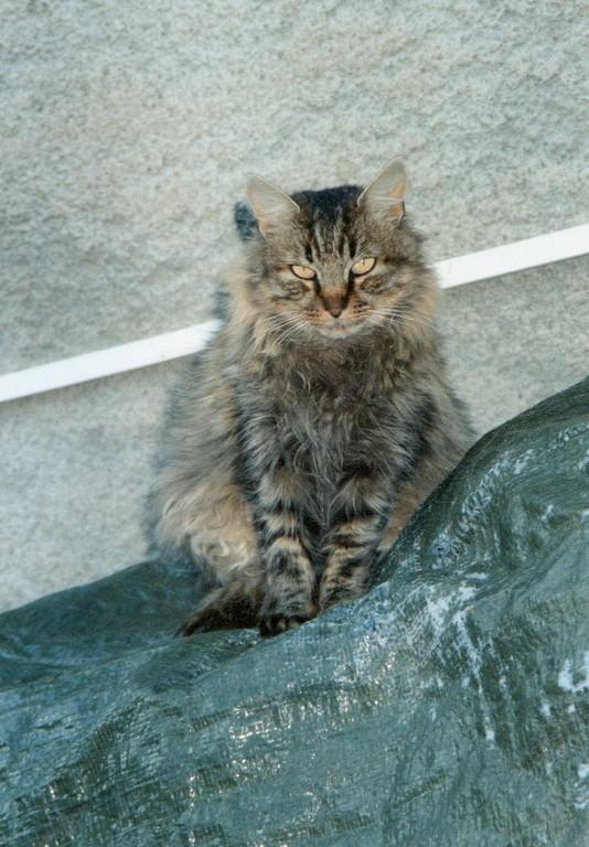 Titine chatte préférée de Duval