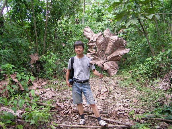 そして一人で帰路。スペイン語が話せなかったら確実に町にたどり着く前にジャングルの餌食になっていた・・・・