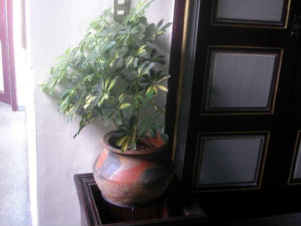 エクアドルに移動。まずクエンカに滞在。野焼きの壺がホテルで使われていた。いい緋色です。