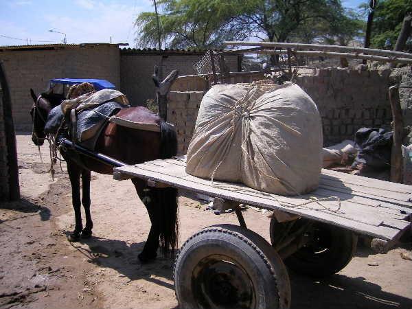 一見ミイラの様に見えるのが粘土。馬で運ばれる。馬の糞は乾燥させて薪の一部になる。