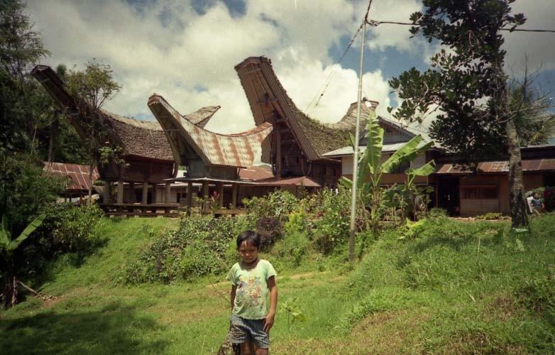 オマケ。スラウェシ島のタナ・トラジャ(トラジャコーヒーの産地です)に、3年前に居候させてくれた家族に再会に行きました。ここで農業をする傍ら、民俗学的な調査(?)をしていました。後ろの「トンコナンハウス」という建物は、竹の屋根なのですが、日本の茅葺き同様、トタン張りに変わりつつあるのが残念。このお宅に滞在していました。彼はそこの末っ子。