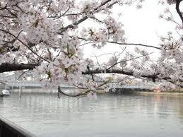 大阪 桜の宮周辺の桜 ネットより