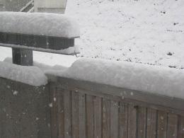高圧洗浄機できれいにした塀にも横殴りの雪
