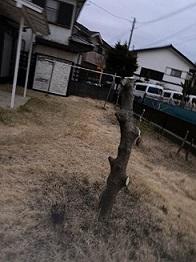 犯人の70代女性は事件直前、庭の木の枝をすべて切り落としたという。写真はネットより。