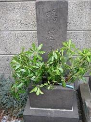 東京回向院の頼三樹三郎の墓「鴨崖墓」と刻されている。 写真/頼山陽ネットワ一ク