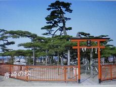 琵琶湖畔、唐崎の松