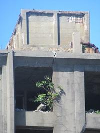 廃墟に育つ木