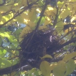 答え 「スダチ」後の巣