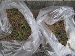 結構な量の枯れ葉、枯れ枝