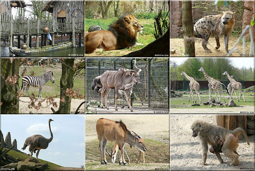 Afrika Teil 1 - 149 Fotos