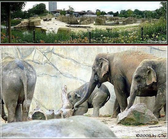Elefantenpark 17.12.08 - 27 Fotos
