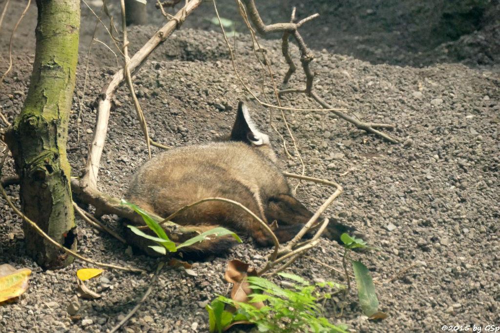 Löffelhund