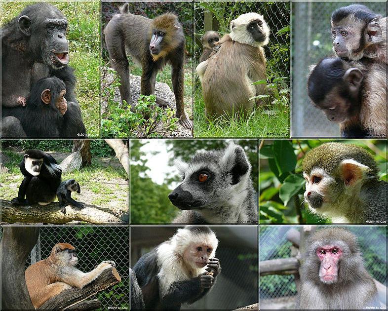 Affenwelt - 100 Fotos