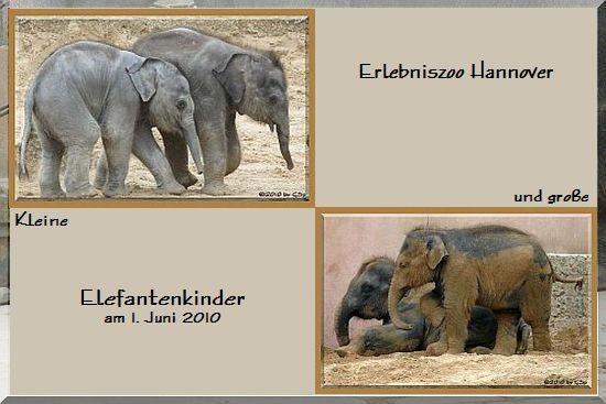Kleine und große Elefantenkinder - 140 Fotos