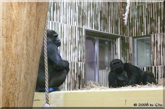 Flachland-Gorilla