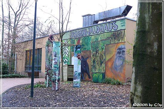 Regenwaldhaus Rumah hutan