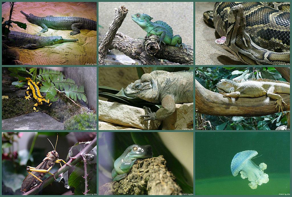 Aquarium - 75 Fotos