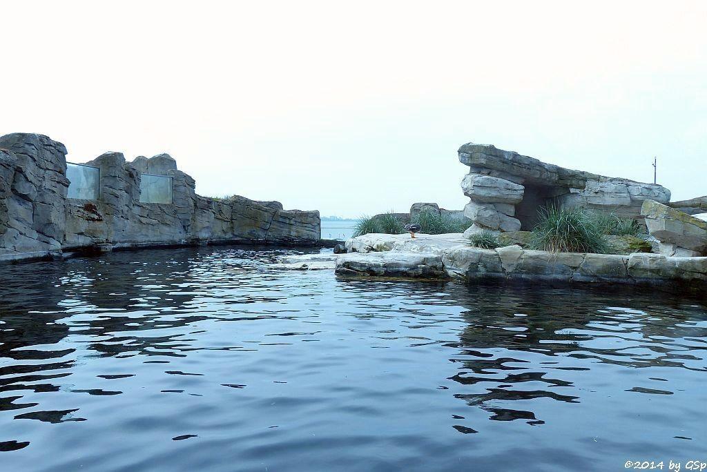 Humboldt-Pinguin und Patagonische Damptschiffente
