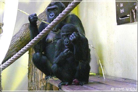 ZSA-ZSA mit Sohn BANJOKO (knapp 2 Jahre alt