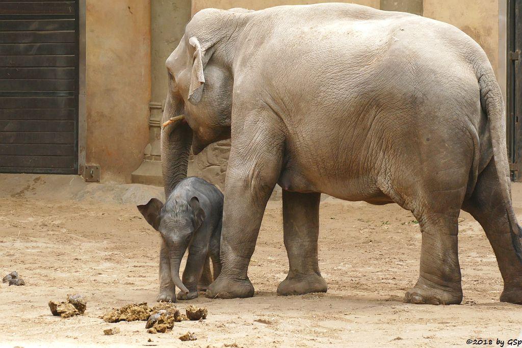 LAI SIN H, SHILA mit ihrem Sohn, geb. 5.5.18 (6 Tg.)