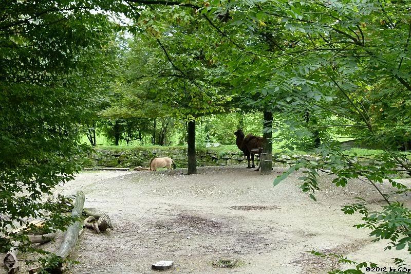 Przewalskipferd- und Trampeltier-Anlage