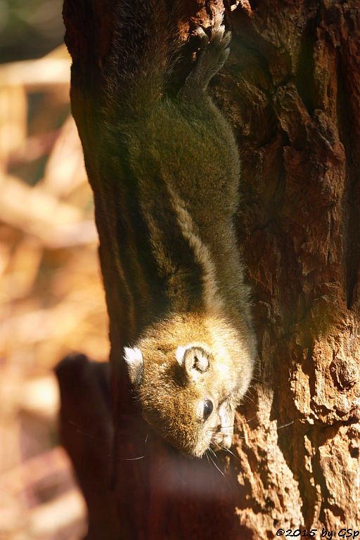 Chinesisches Baumstreifenhörnchen