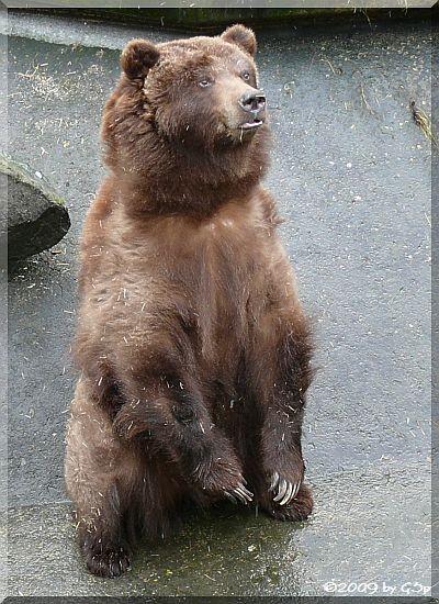 GrizzlybärGrizzlybär