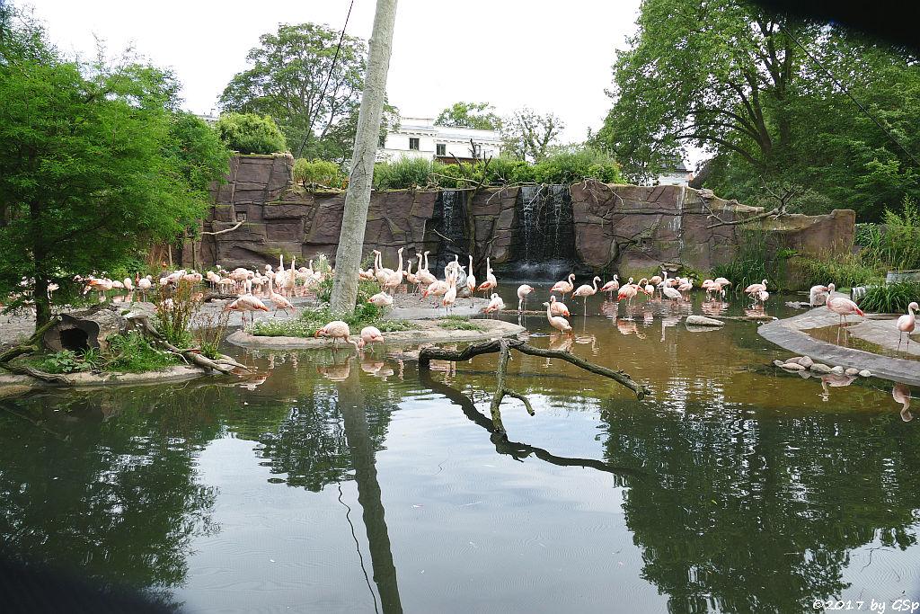 Flamingolagune
