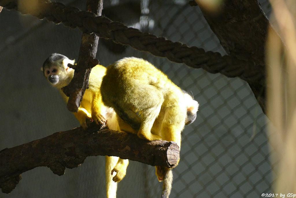 Bolivianischer Totenkopfaffe