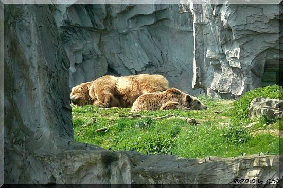 Kodiakbären BUFFY und BRENDA