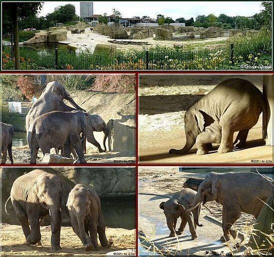 Elefantenpark 28.11.11 - 110 Fotos